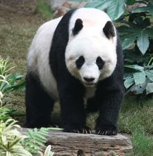 Blog Posts About the Google Panda Update – Distaster, Recovery, Continuous Improvement