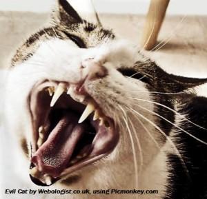 Webologist's evil cat