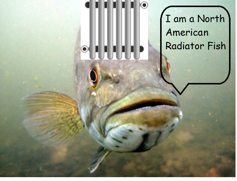 north american radiator fish